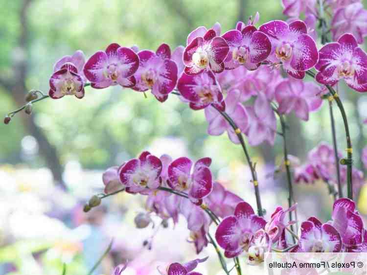 Pourquoi mon orchidée fait-elle des feuilles mais ne fleurit-elle pas?