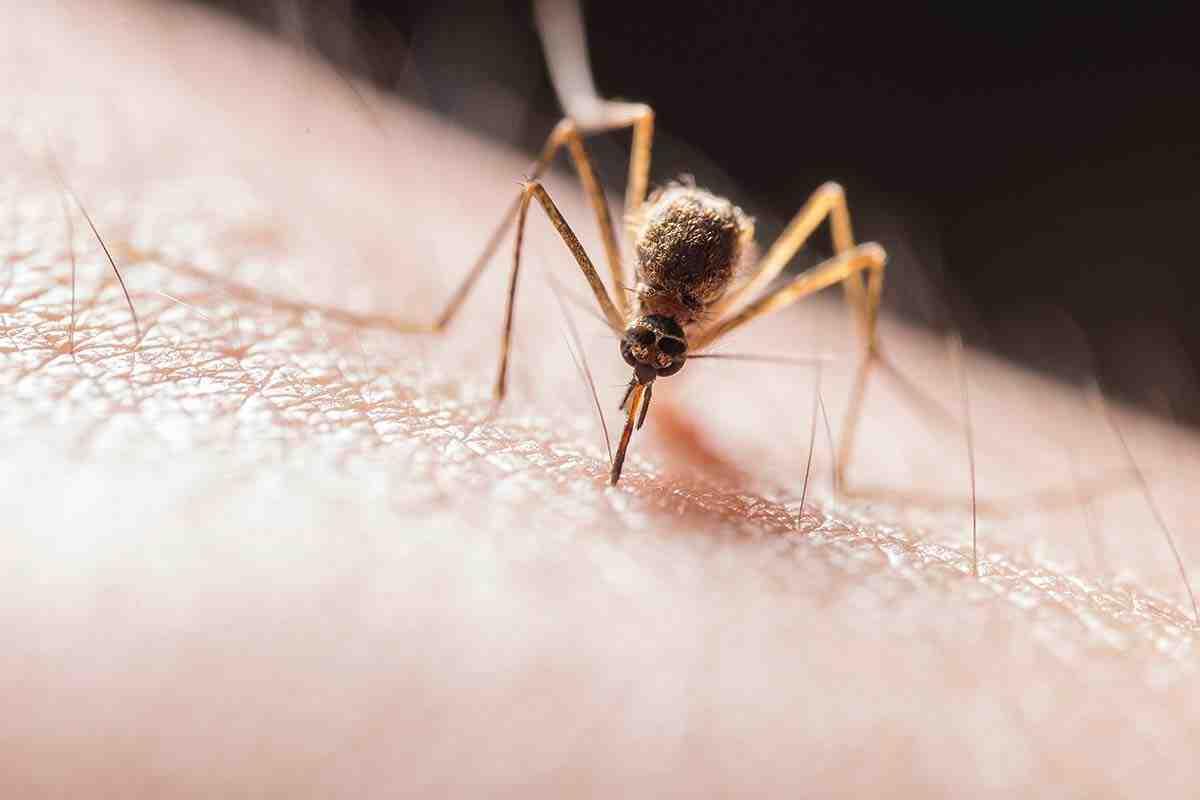 Comment se débarrasser des mouches à l'extérieur?