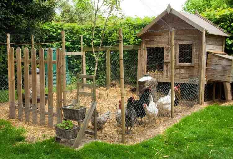 De combien d'espace avez-vous besoin pour 2 poules ?