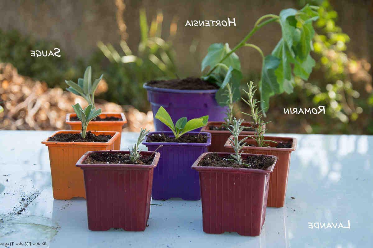 Quelles plantes pouvez-vous couper?